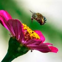Puisi Kisah Kumbang Dan Bunga